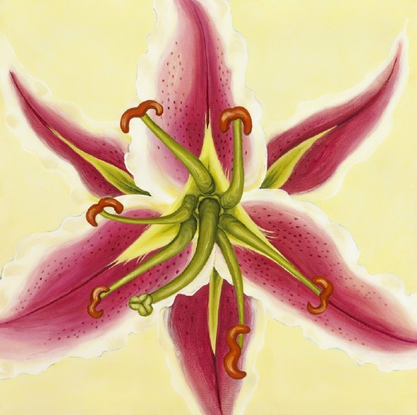 "stargazer lily, acrylic on canvas, 24 by 24"", 2009"