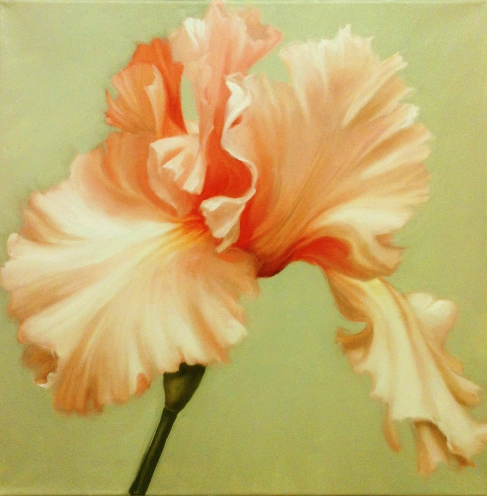 Iris 1, oil, 16x16 inches, 2014