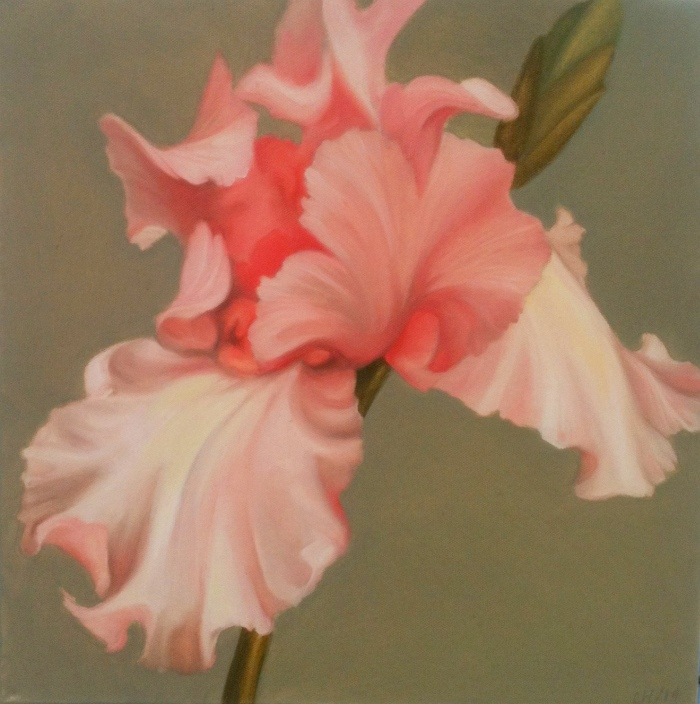 Iris 2, oil on canvas, 16x16, 2014