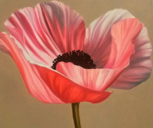 Pink Poppy (oil on canvas, 24x24 inches, 2014)