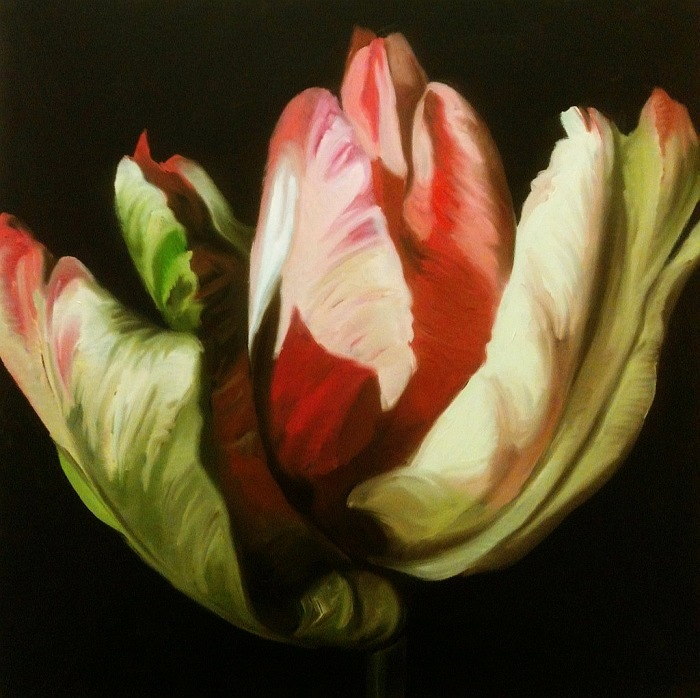 Tulip in the Dark 4, oil on canvas, 24x24 inches, 2014